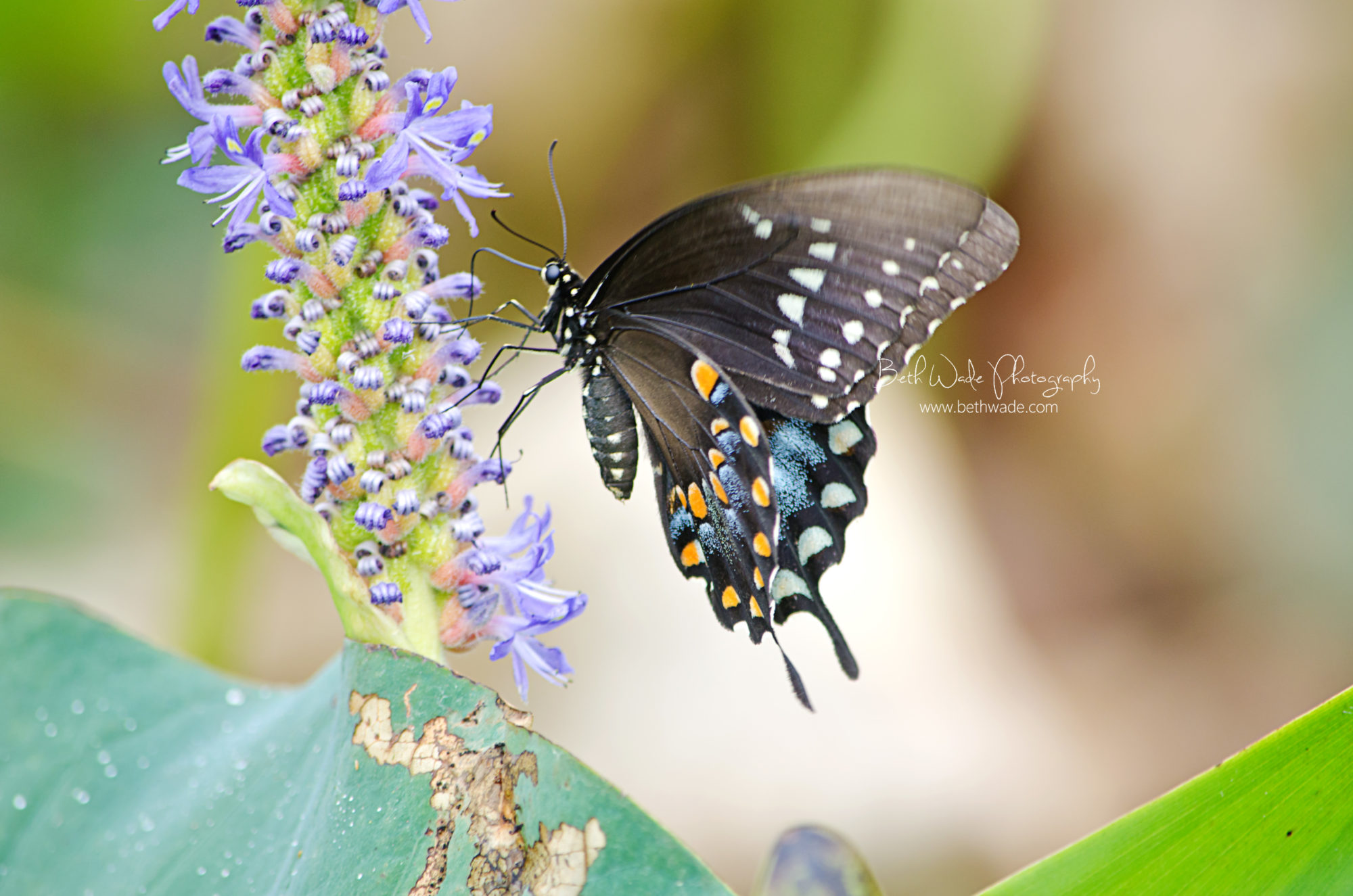 summer butterfly {macro} charlotte family photographer